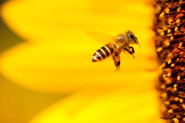 bees | Longevity LIVE