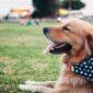 dogs | Longevity LIVE