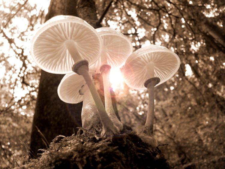 Gwenyth shares power of mushrooms [longevity live]
