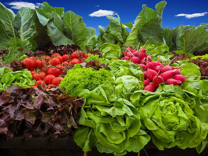 Superfood garden