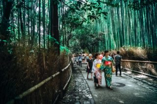 forest bathing in Japan [longevity live]